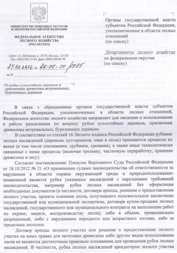 В тюрьму за сучок - в России теперь могут посадить за сбор дров (документ)