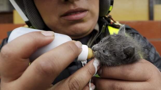 Police officer Liliana Coronado feeds rescued kitten Danesca