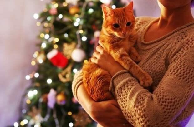 Чудо новогоднее — рыжее...