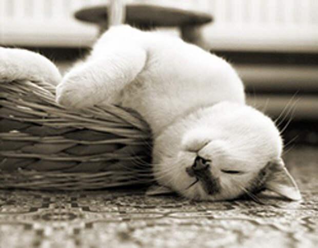 Кошки и сон