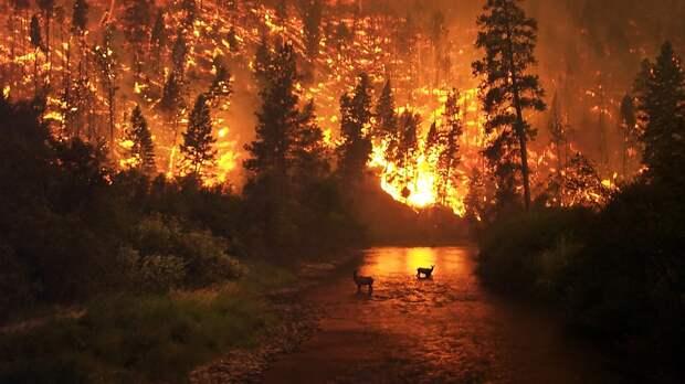 Вильфанд назвал самые пожароопасные регионы России