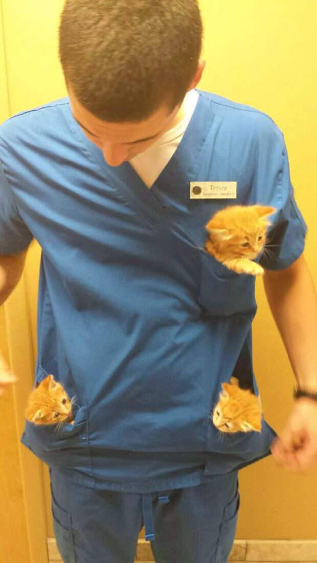 Преимущество номер один: карманные котята! ветеринары, животные