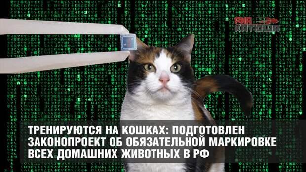 Тренируются на кошках: подготовлен законопроект об обязательной маркировке всех домашних животных в РФ