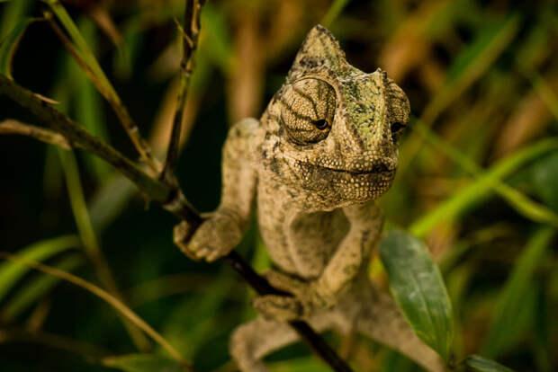 37 фотографий животных, которые вызывают улыбку