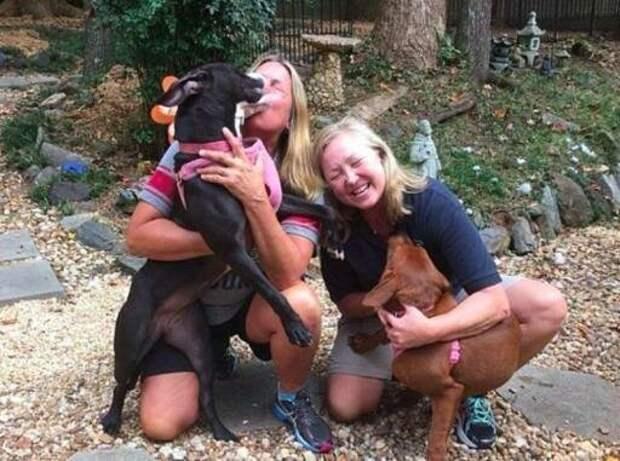 Пару собак собирались усыпить, а спасло их чудо