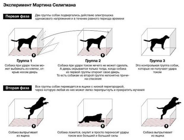 рисунок с собаками в ящиках