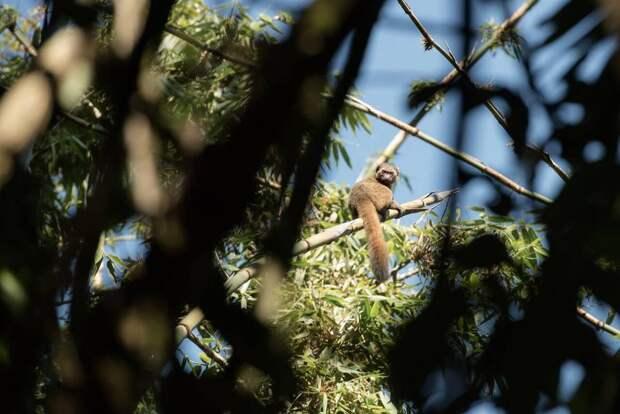 """Мадагаскар: фотопутешествие на """"континент в миниатюре"""""""