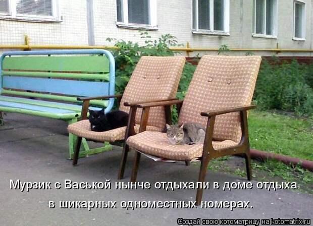 Котоматрица: Мурзик с Васькой нынче отдыхали в доме отдыха в шикарных одноместных номерах.