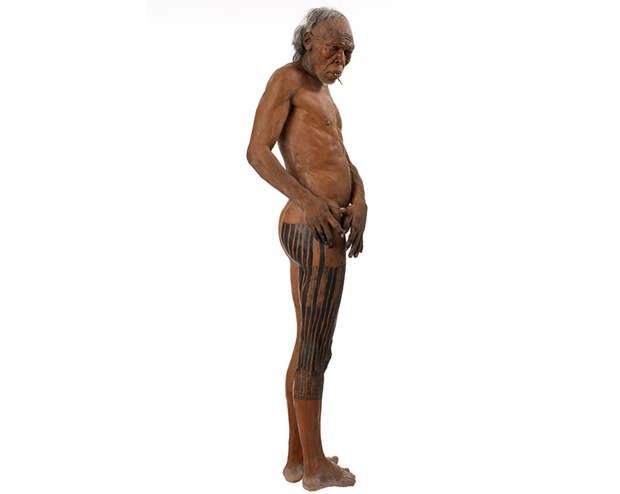 homo-sapiens-model-on-white-two-column.jpg