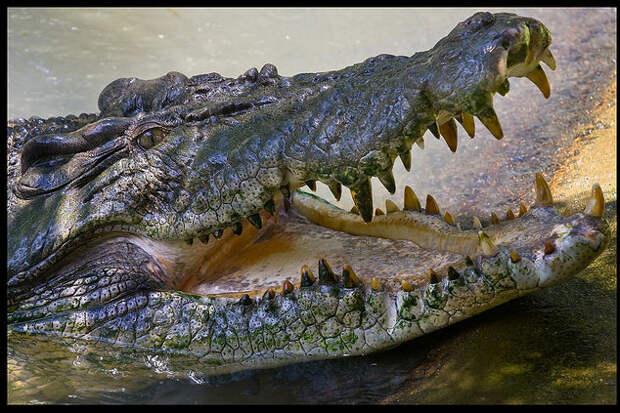 Крокодилы, деготь и интернет против коррупции