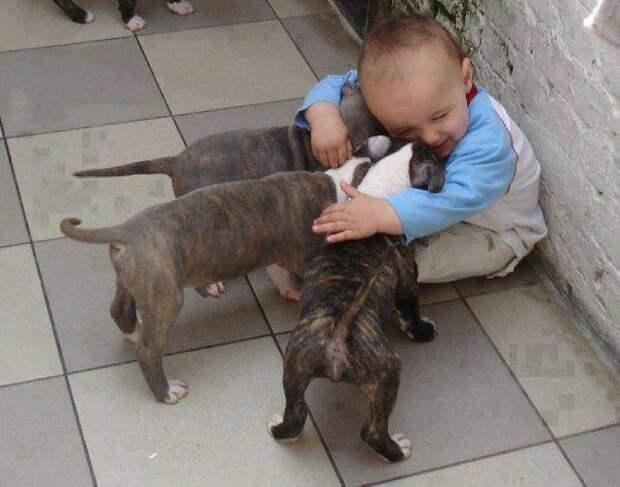 дети должны расти с домашними животными (7)