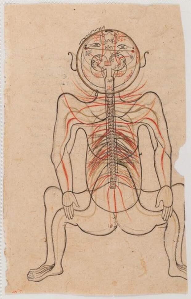 Первая книга о строении человеческого тела, опубликованная в исламском мире.
