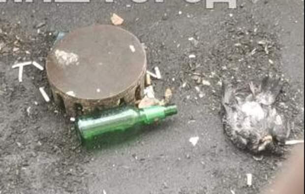 С козырька дома на улице Авиаконструктора Миля убрали погибших птиц