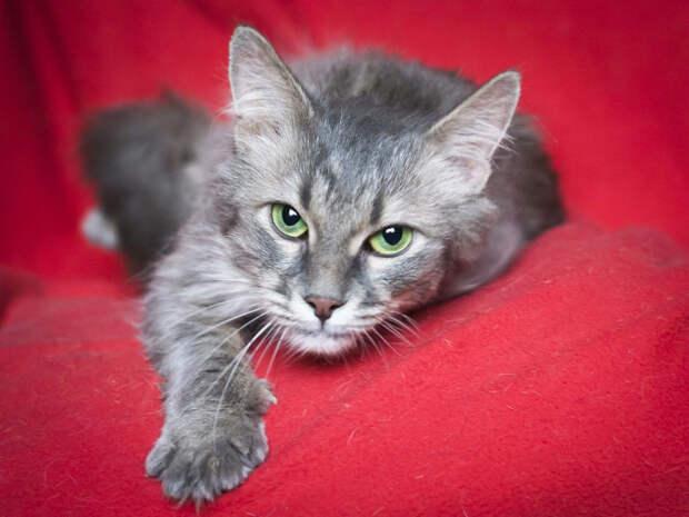 Пятничная кошечка Соня – лучший подарочек в этом году!