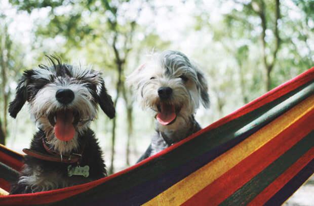 Что говорит ваша собака? Эксперты распознали 19 собачьих жестов