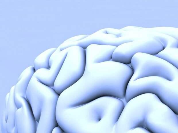 Мозговые извилины