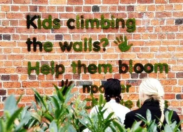 Как сделать живое граффити из мха