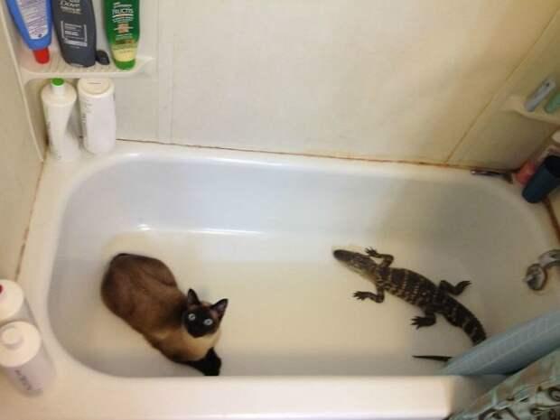 Коты, которые сами нашли своих хозяев