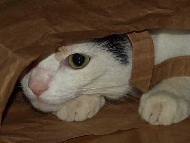 Уголовное дело возбудили после гибели более 60 кошек в приюте Оренбурга