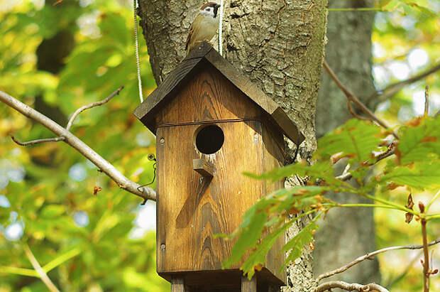 Каким должен быть правильный скворечник для птиц?