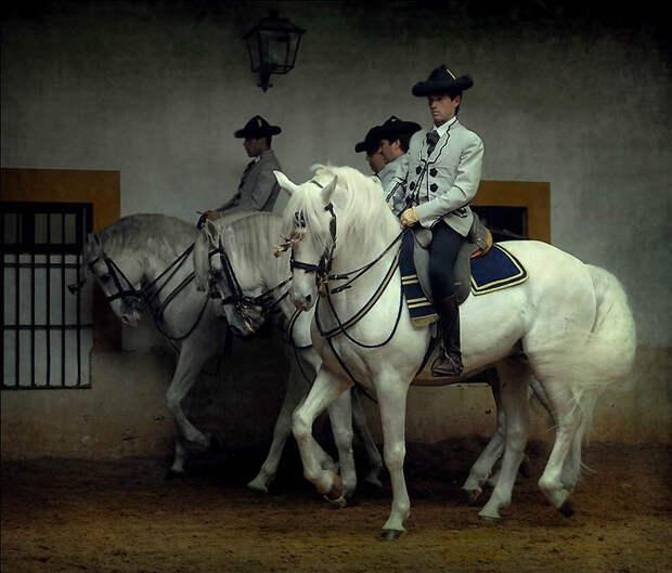 18. На Всемирных конных играх 2002 две андалузские лошади были в команде объездки лошадей, которые п