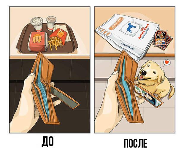 Как собака изменит твою жизнь (и квартиру). Вся правда в 9 картинках