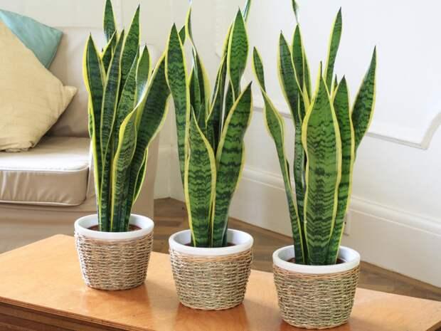 10 комнатных растений для ленивых