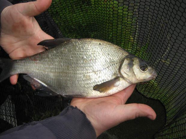 Рыбацкий Клондайк
