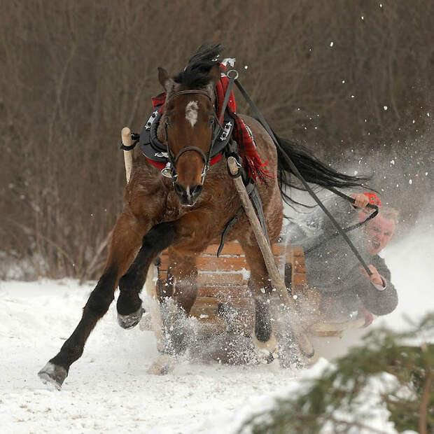 6. Арабские лошади С восходом легкой кавалерии выносливость и подвижность арабских лошадей давало