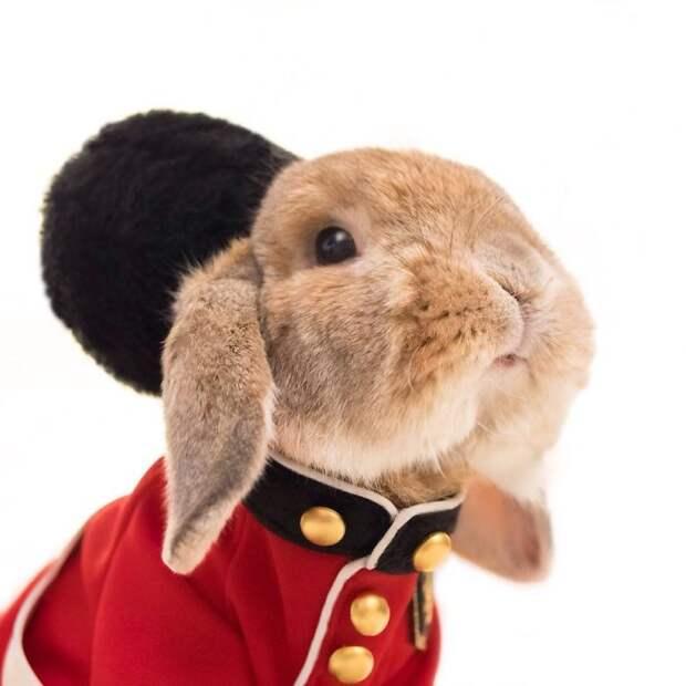 Стильный кролик Пуй-Пуй (трафик)