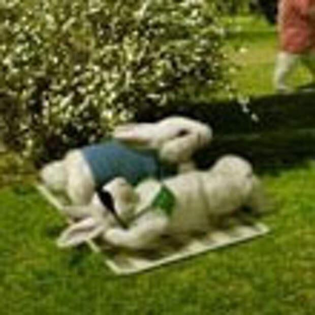 Презервативы сделали из кролика человека!