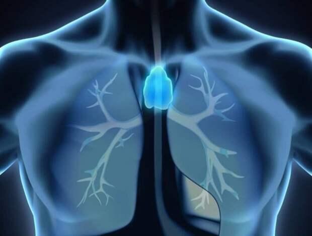 Как поддержать здоровье вилочковой железы
