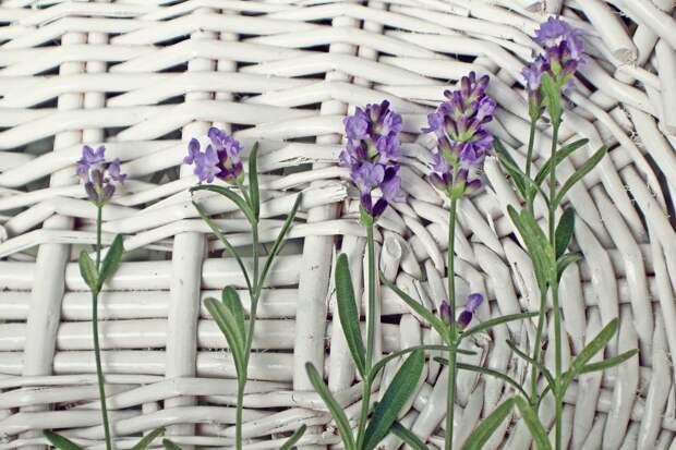 какие травы посадить на даче