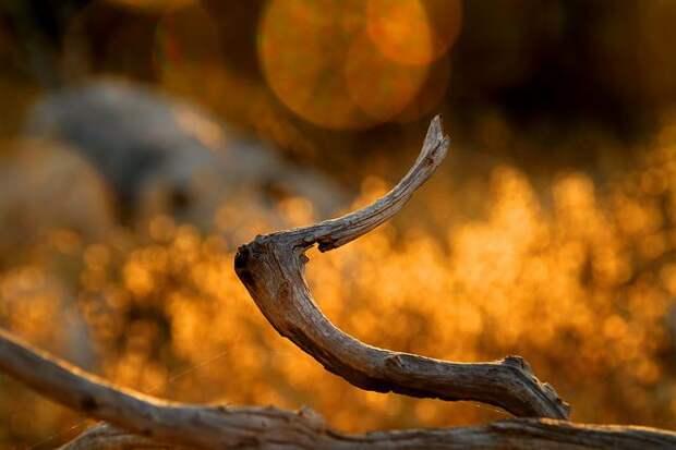 притча о дереве