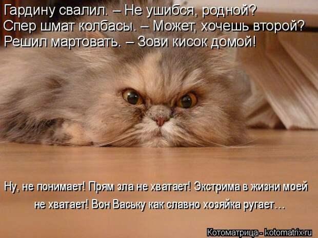 Котоматрица: Ну, не понимает! Прям зла не хватает! Экстрима в жизни моей  не хватает! Вон Ваську как славно хозяйка ругает… Гардину свалил. – Не ушибся, ро