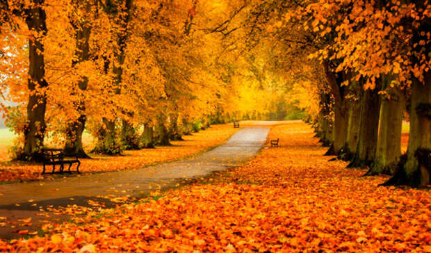 Яркие краски и без осадков: в Центр Россию идет классическая золотая осень