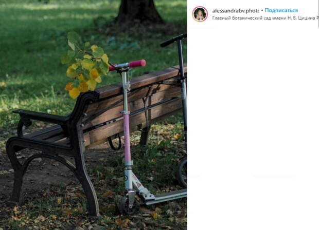 Фото дня: жители Марфина увезли с собой кусочек осени из сада
