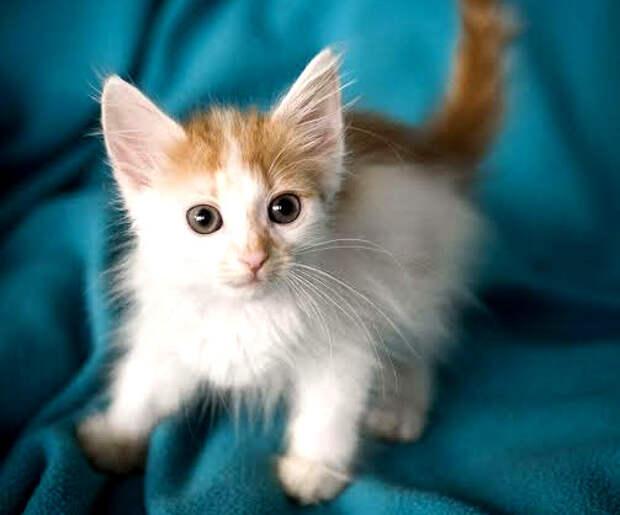 Пятничный котенок Лайти: луч света в темном царстве