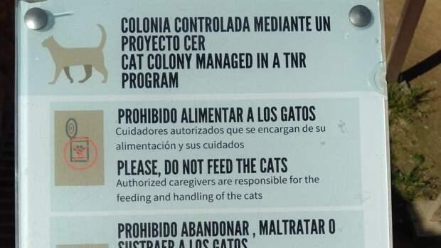 Гранада: фламенко, Альгамбра и котики
