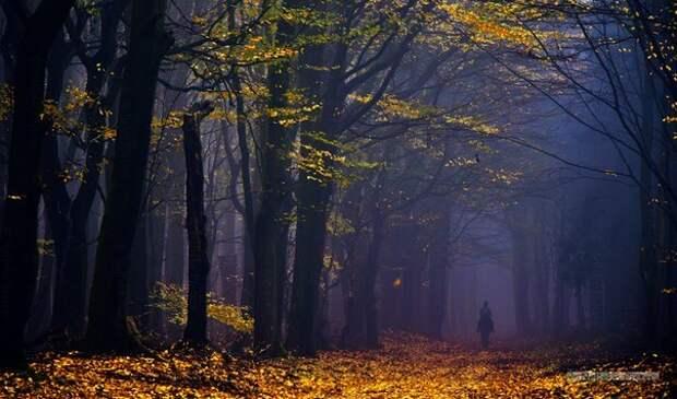 Роскошные фотографии, запечатлевшие красоту лесов Голландии