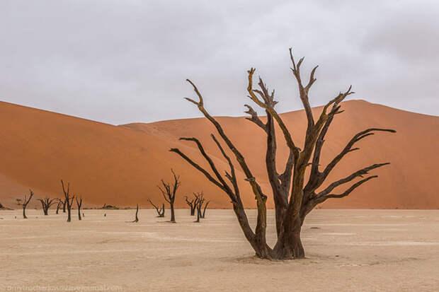 Путешествие на Мертвое болото Намибии