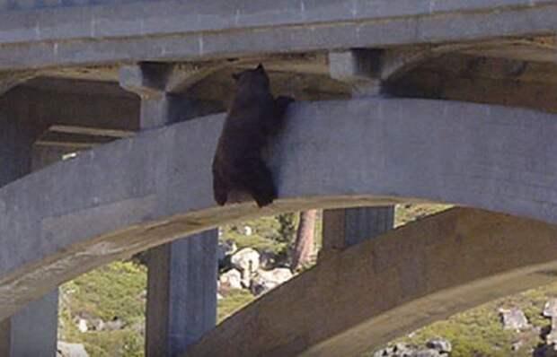 24 часа над пропастью! Медведь висел… устал… но знал, что помощь обязательно придёт!