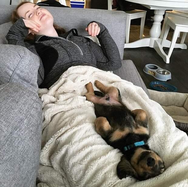 Новый тренд Инстаграма: хозяева фотографируют своих собак, показывая их животики