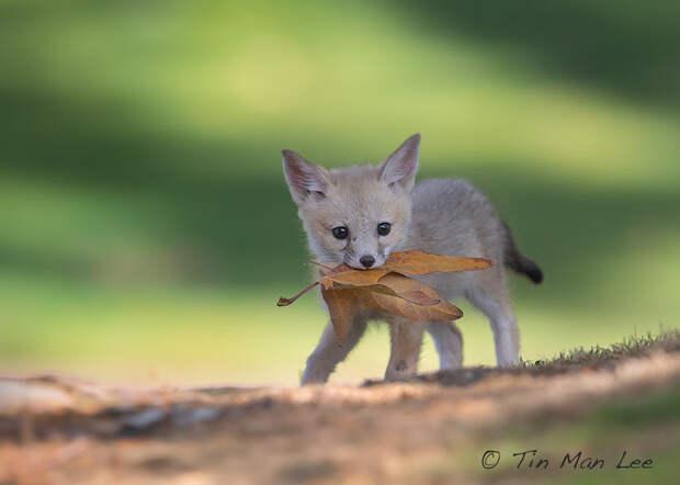 10 талантливых фотографов дикой природы на 500px