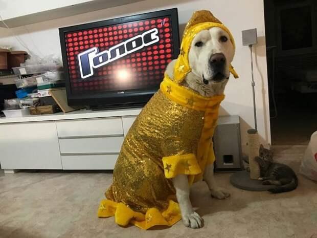 У Марти готов золотой костюм Снегурочки.