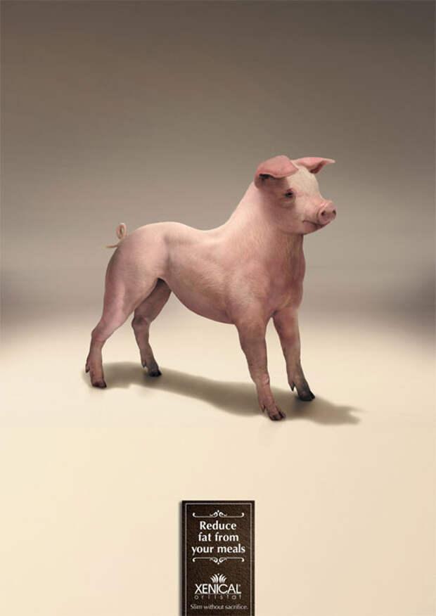 Как выглядит свинья без жира