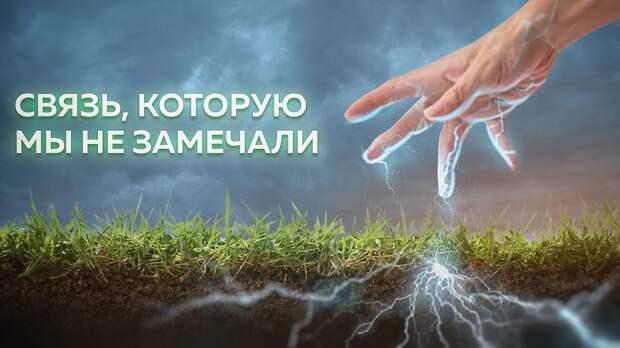 Живые электросети находят по всей планете.