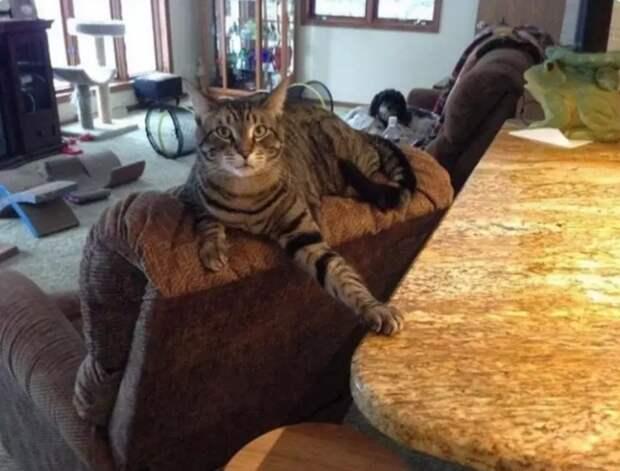 15 доказательств того, что без котов наша жизнь была бы слишком скучной