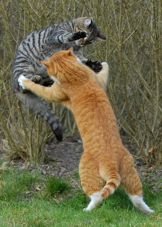 cat_flying_fight_16
