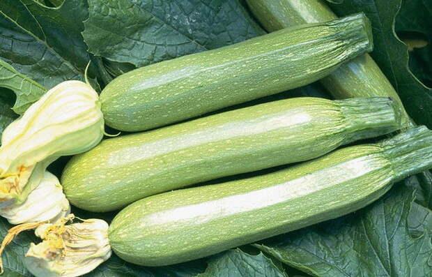 Можно ли вырастить сортовые цукини из вынутых из кабачка семян?